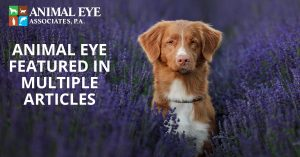 Our animal eye specialists were featured in multiple articles