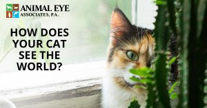 How does your cat see the world