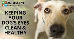 How to keep your dog's eyes clean and healthy