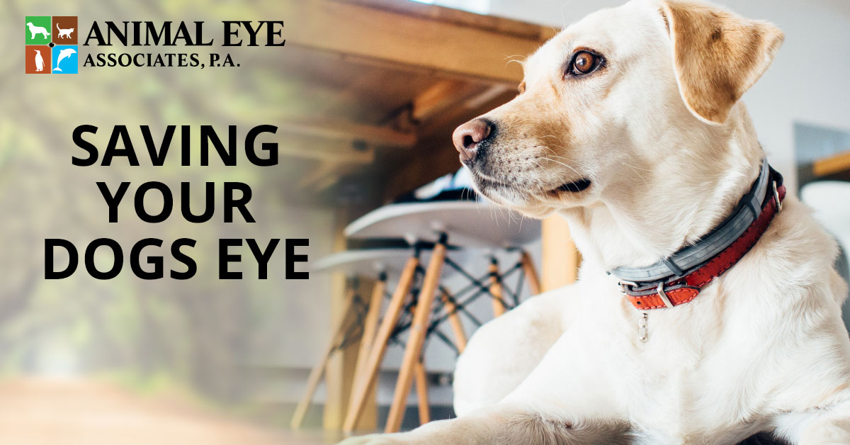 Saving your dogs' eye