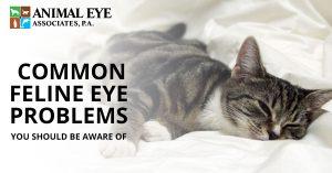 Common feline eye problems