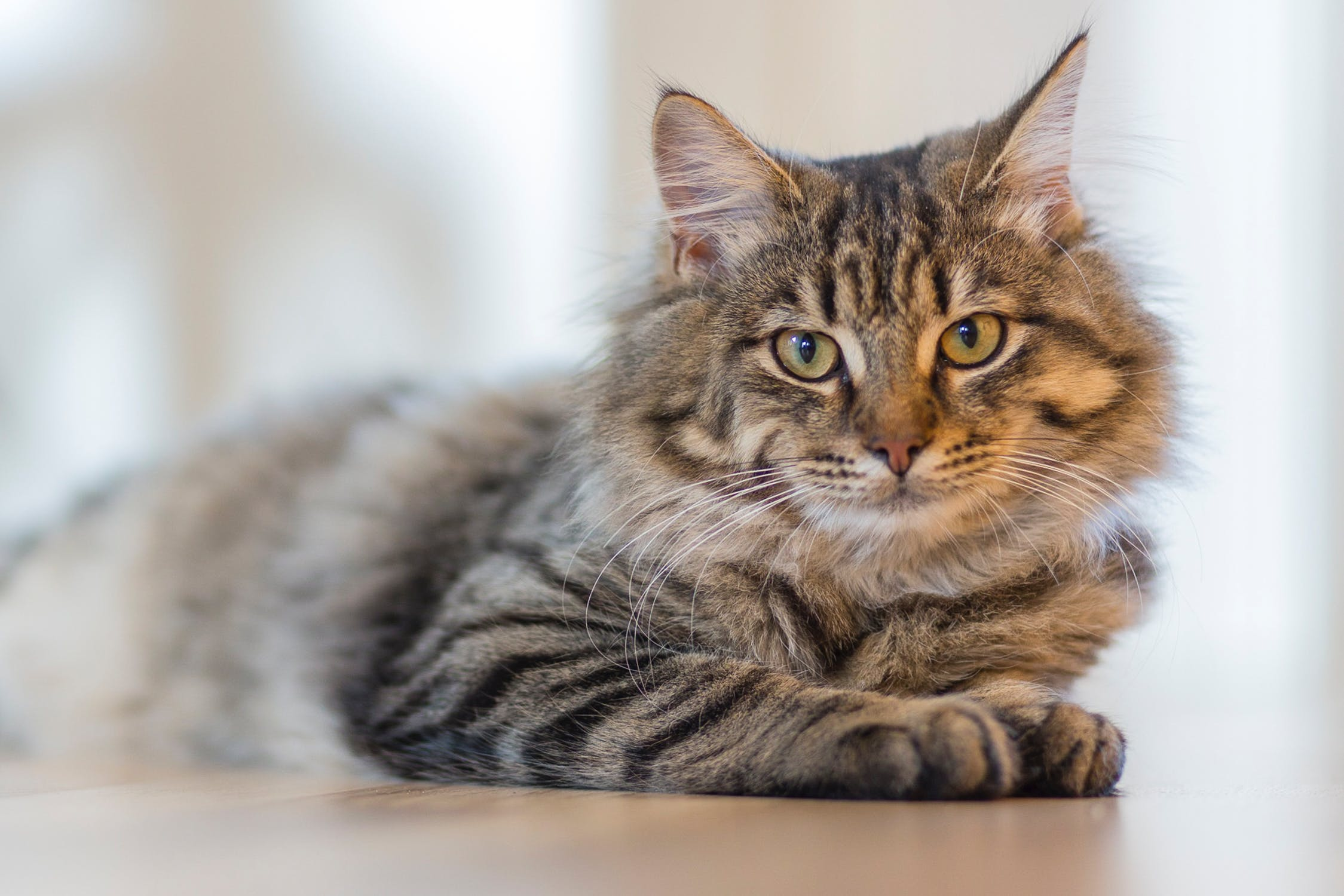 Feline Eye Conditions Learn What They Are Animal Eye