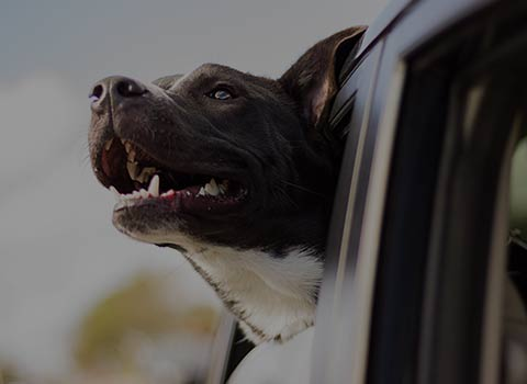 A brown and black dog sticking his head out of a car window