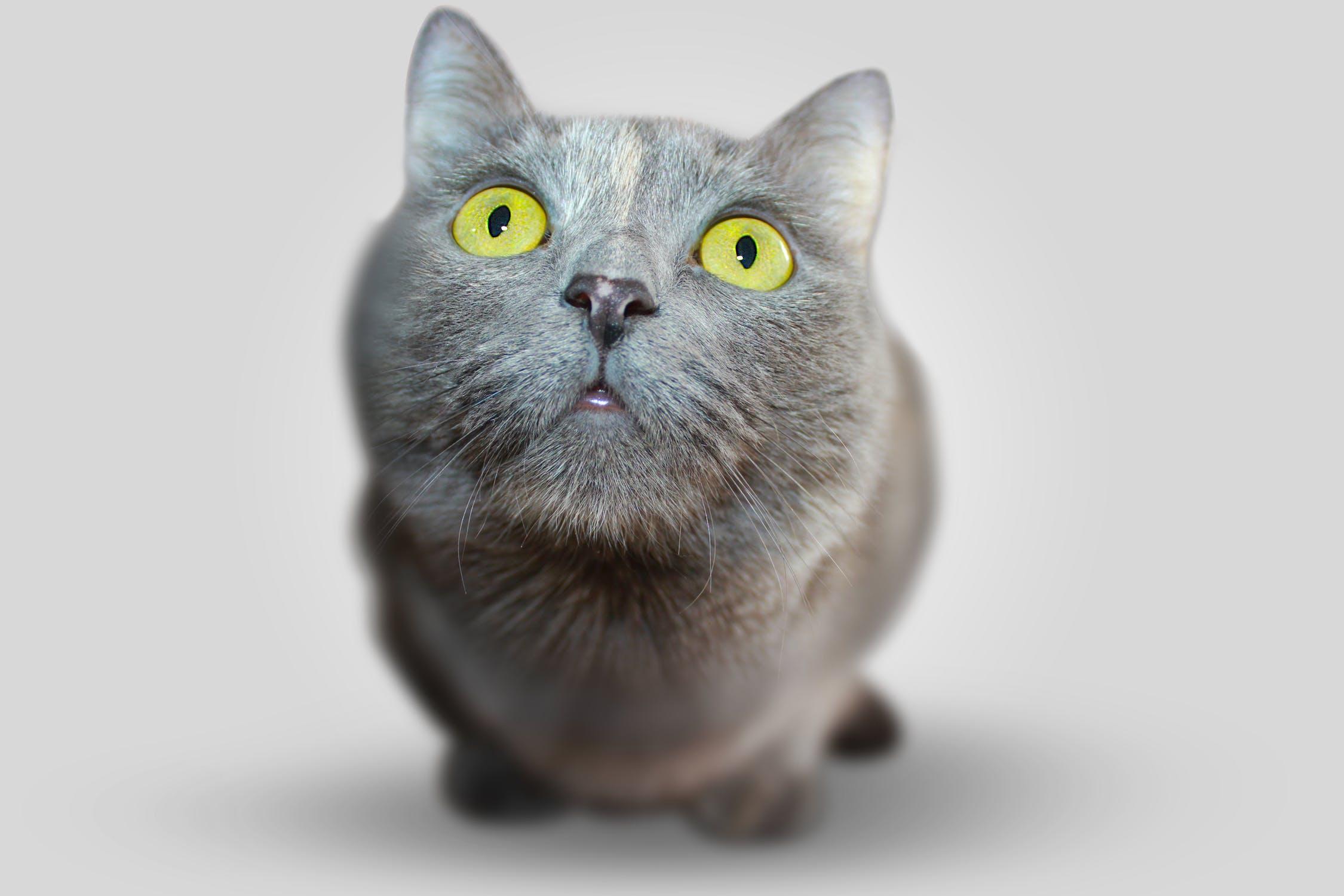 small animal ophthalmology whats your diagnosis