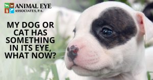 How to help your dog or cat when they have something in their eye