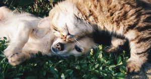 A puppy and kitten carousing on grass