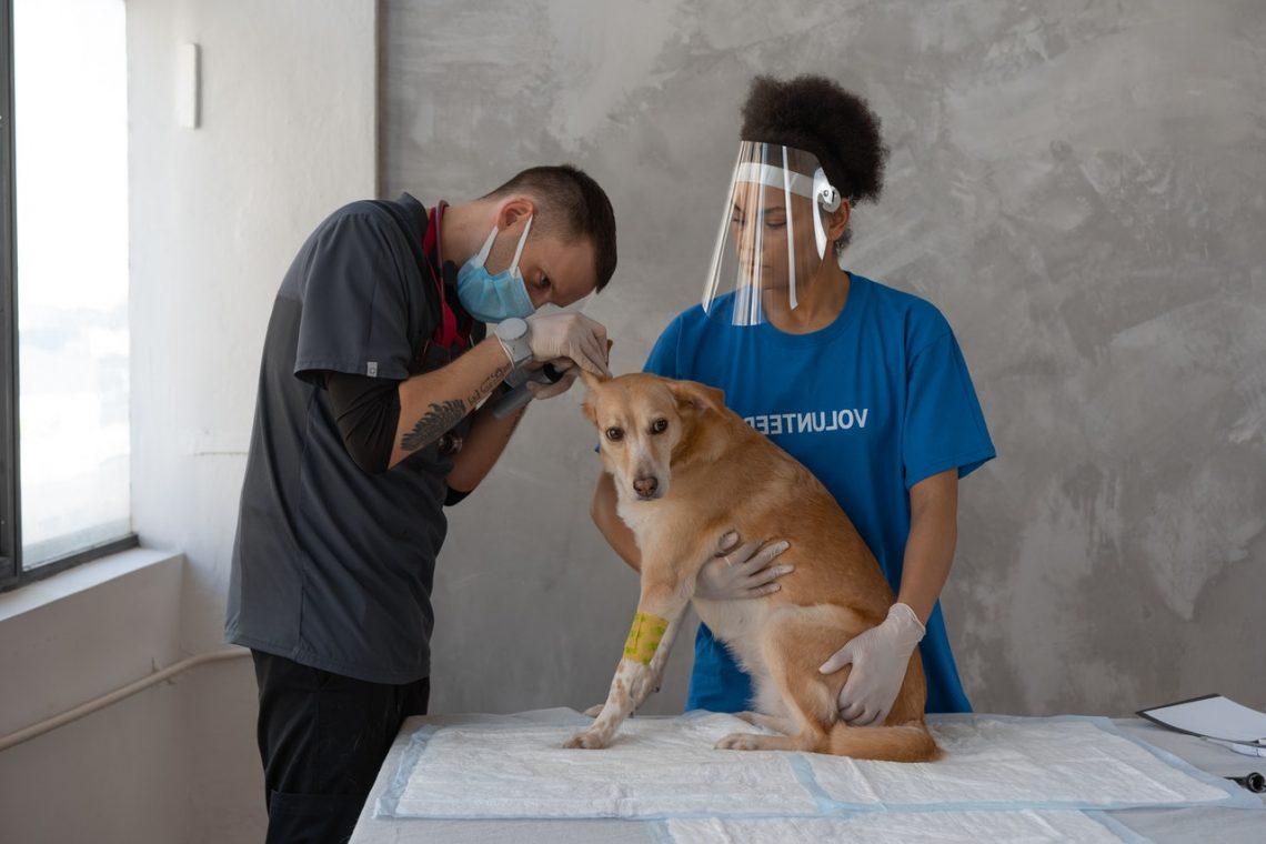 Veterinarian examining a dog using vet management software protocols in Australia