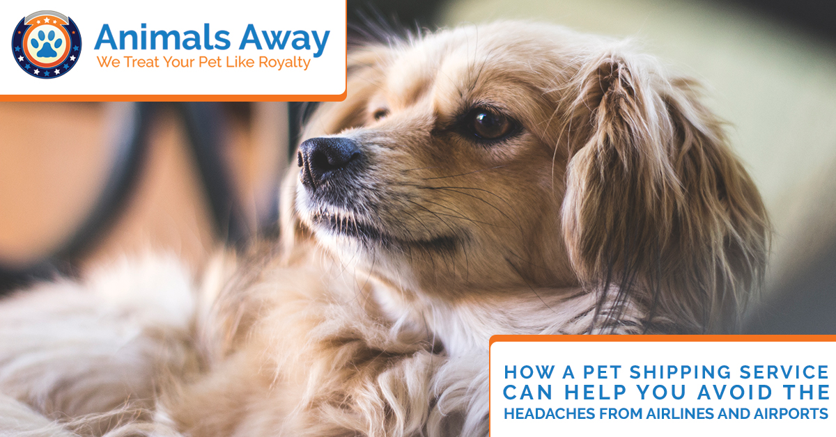 Shipping pets how pet shipping avoids the headaches of airlines how a pet shipping service can help you avoid the headaches from airlines and airports sciox Gallery