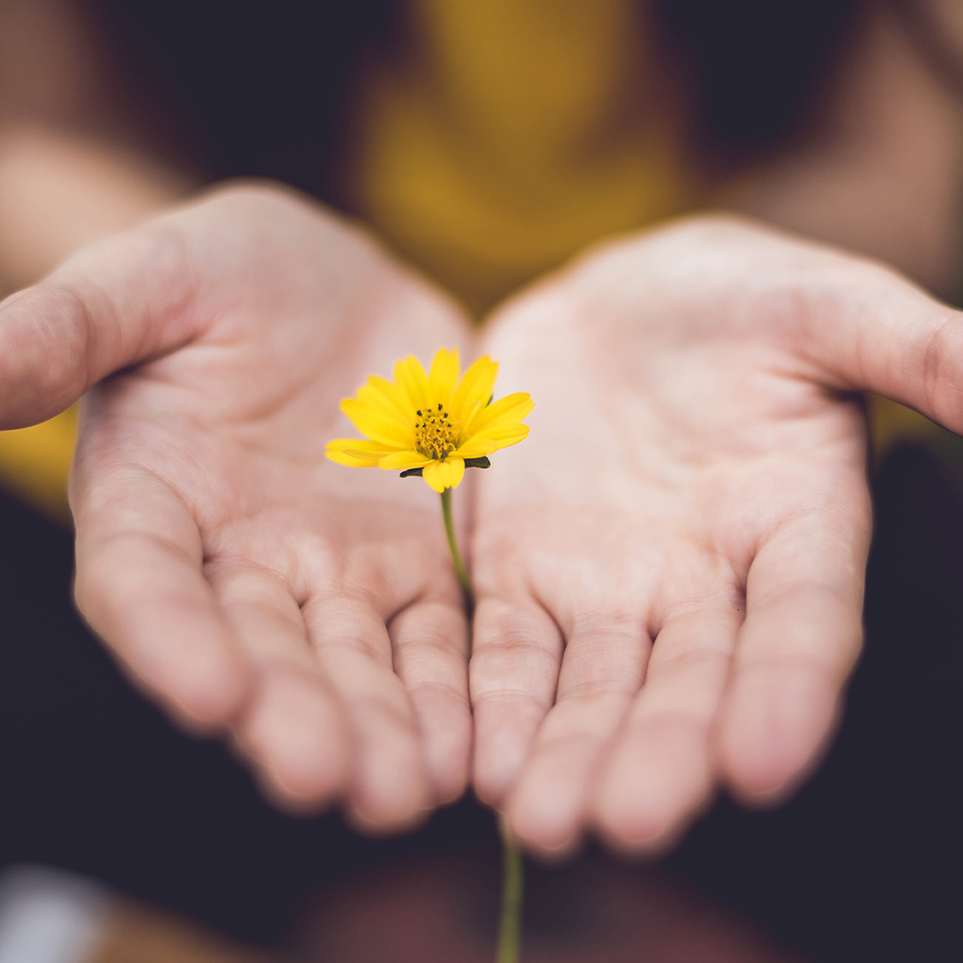 picture of woman's hands holding flower