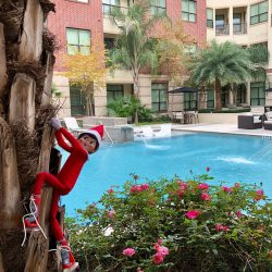 Houston luxury apartment - climbing the palm tree at the pool