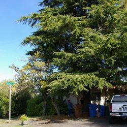 Tacoma tree removal