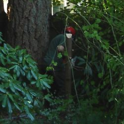 tree removal in Tacoma