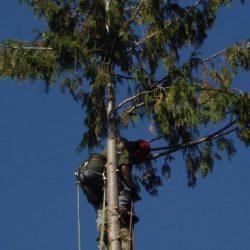 Team member removing tree