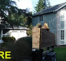 tree removal, before and after