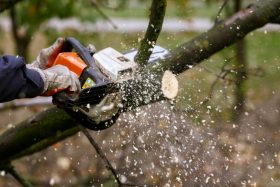 Chainsaw cutting log.