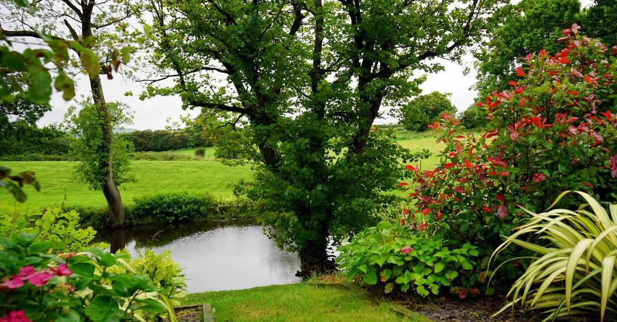summer tree care tips apex tree experts tacoma