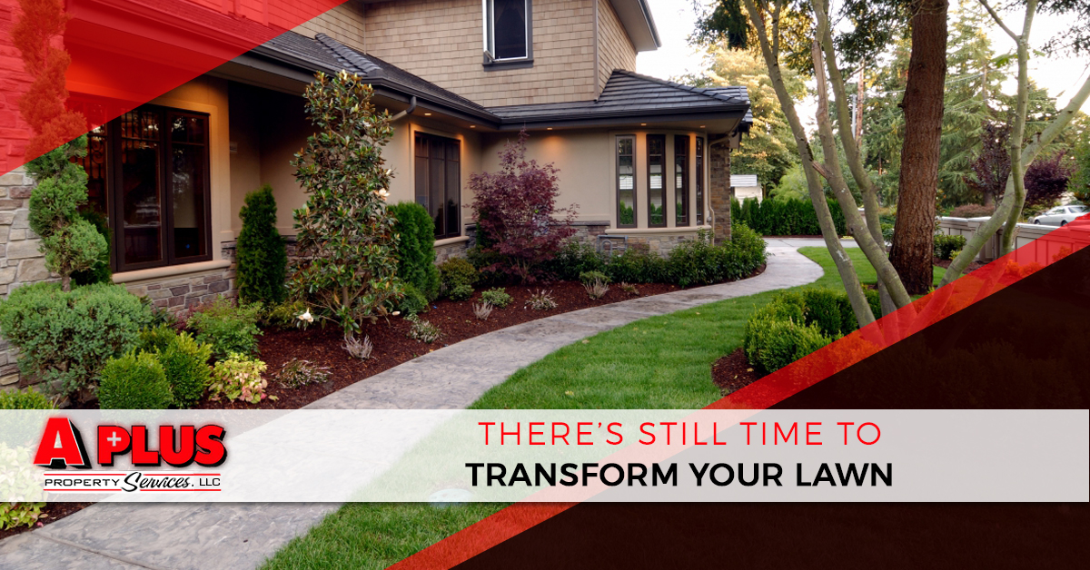 """There's still time to transform your lawn."""