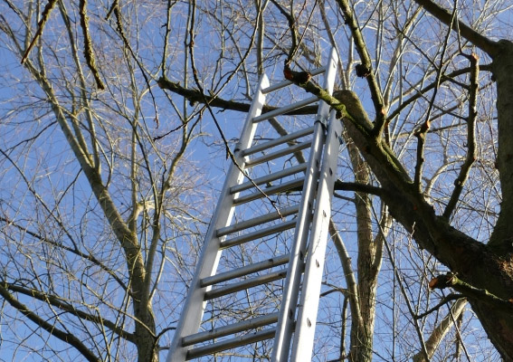 A ladder propped against a tree.