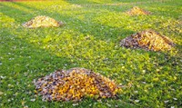 Piles of Leaves in Landscape