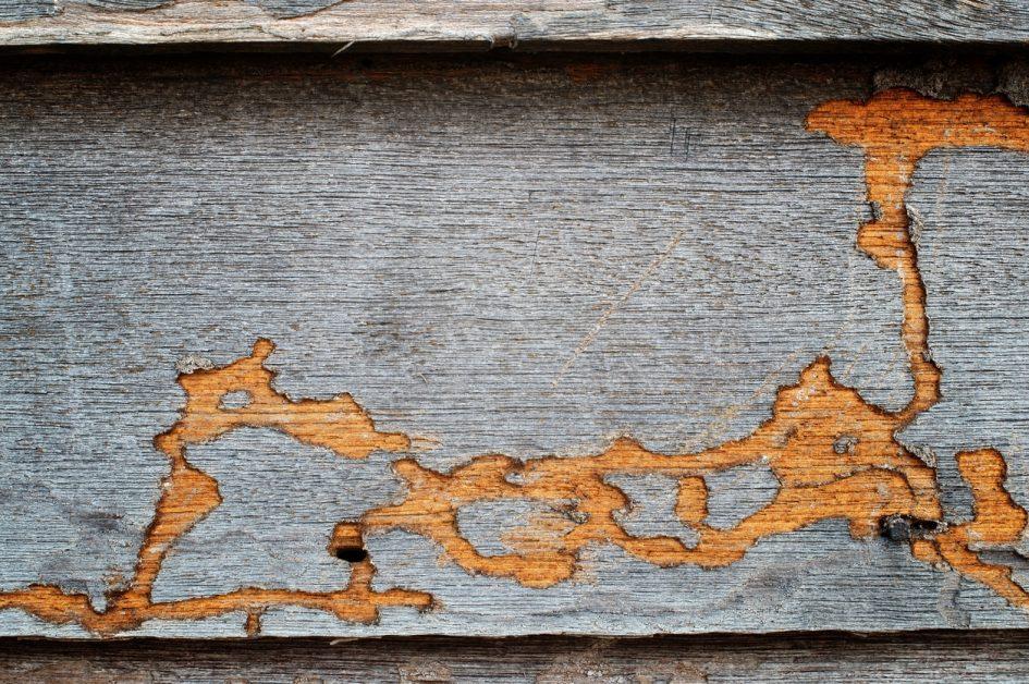 Termite Wood Grain