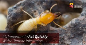 Act Quickly With Termite Infestation