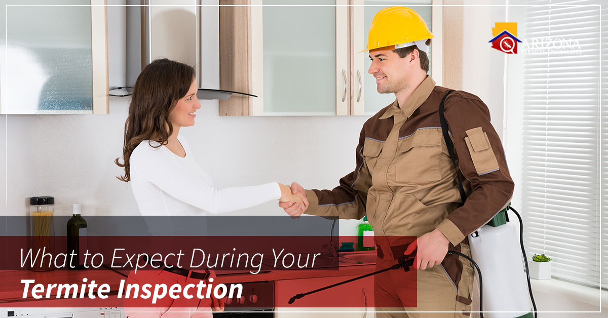 Termite Inspection Expectations