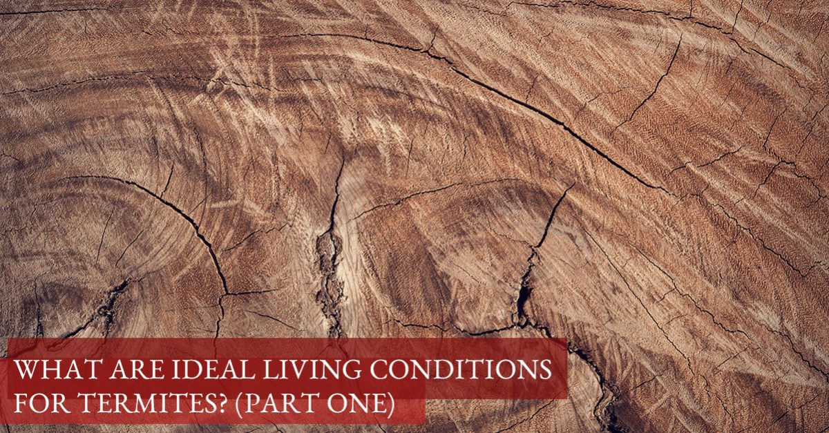 Ideal Termite Conditions