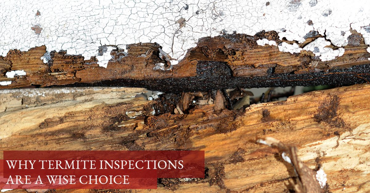 Why Termite Inspections Are a Wise Choice