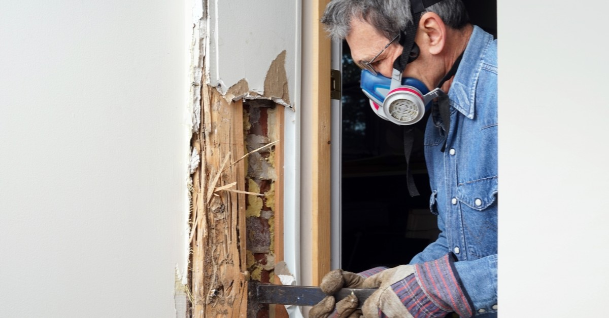 diy termite infestation peoria arizona termite specialists
