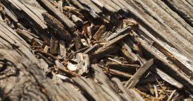 little known termite facts mesa arizona termite specialists