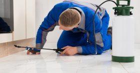 Exterminator Spraying Home's Baseboards