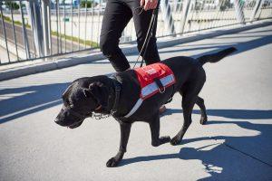 hearing loss guide dog Chanty