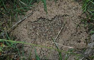 Fire Ant Pest Control Austin