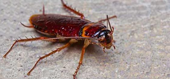 Cockroach Pest Control Austin