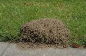 facebook fire ants