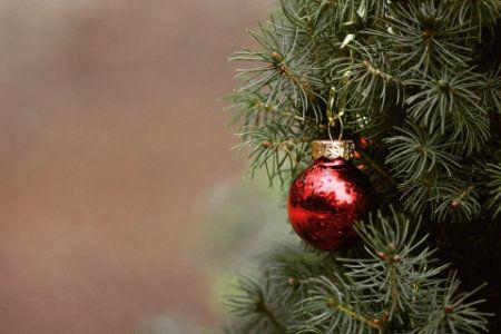 Christmas Tree ticks, aphids