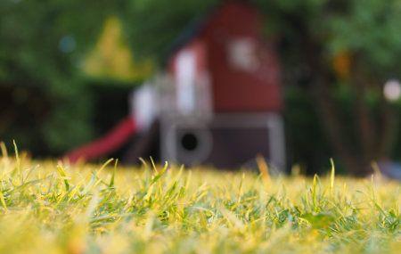 Backyard lawn fire ant treatment