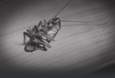 Dead American Roach Austin