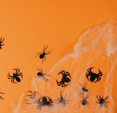 Spider pest control Halloween theme