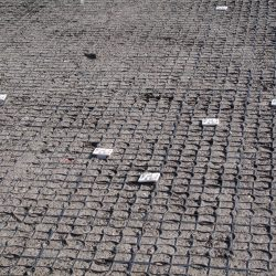 Permeable Soil Stabilization Matting For Dirt Surface - B8 Ventures