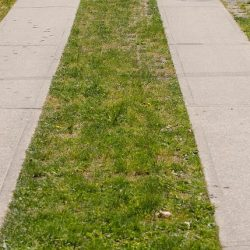 Country Lane Grass Stabilization After Six Years - B8 Ventures