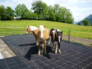 Horses can stand on and use ecoraster before it is filled