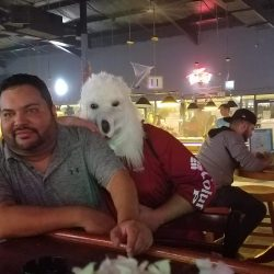Image of wolf leaning on man at the bar
