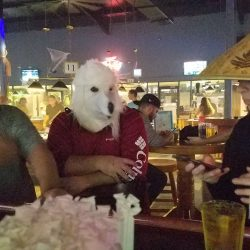 Image of dressed up customers sitting at the bar