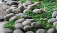 Rock and Grass Closeup