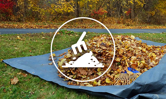 Leaf Removal With Leaf Icon