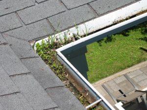 clogged-gutter-mold (1)