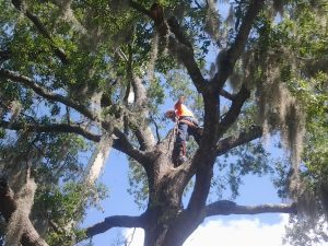 BDC Tree Service Goes Out On A Limb For Your Tree Removal.