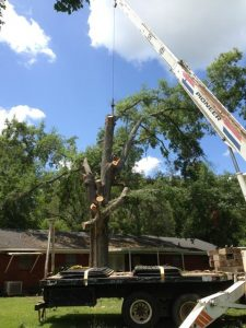 BDC Tree Service Using Their Crane For A Tree Removal Job