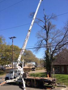 Quality Tree Care From BDC Tree Service